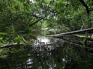 Gosener Dschungel