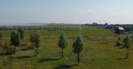 Salzwiesen des Landschaftsparks Altenbruch